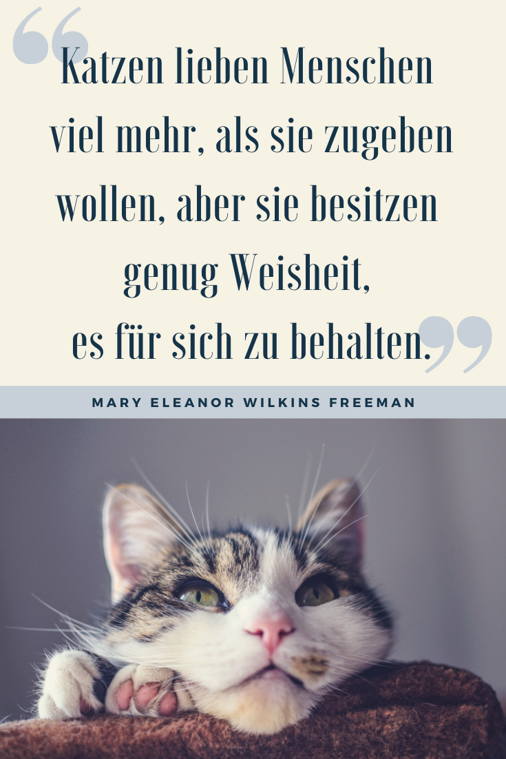 Katzensprüche Tolle Sprüche Für Alle Katzenliebhaber